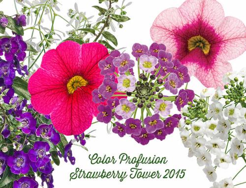 Strawberry Tower Planting 2015