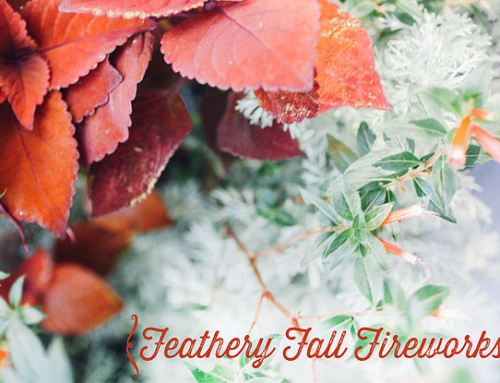 Autumn Container Garden Recipe: Feathery Fall Fireworks