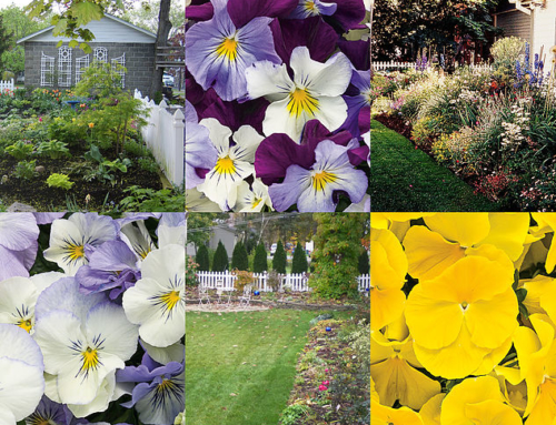 'Marching' To More Beautiful Gardens