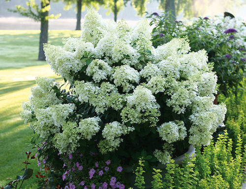 Let's try something new with flowering shrubs