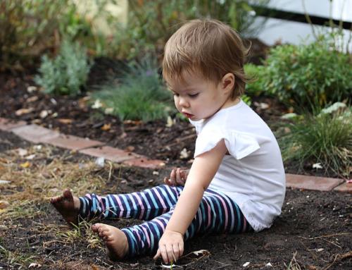 Let's Make A Garden