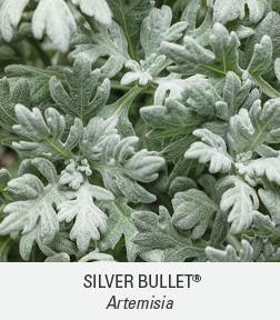 silver bullet artemisia