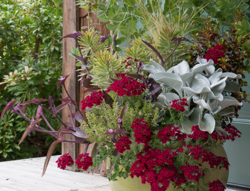 Designer Tricks: Creating a Dramatic, Long-Lasting Summer Container