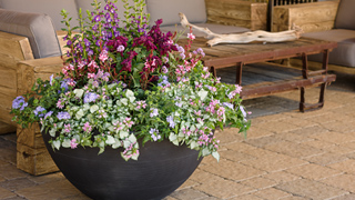 container gardening hub link