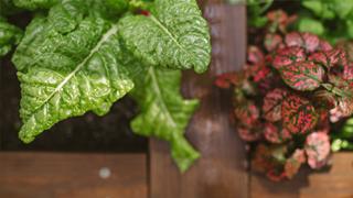 potager garden link