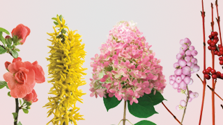 cut flower guide link