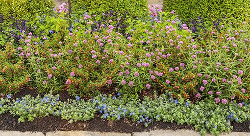 pollinator garden bird's eye view
