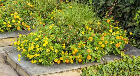pollinator garden and walkway