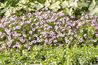 pollinator garden link
