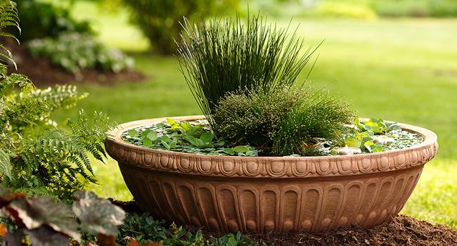 water garden link image