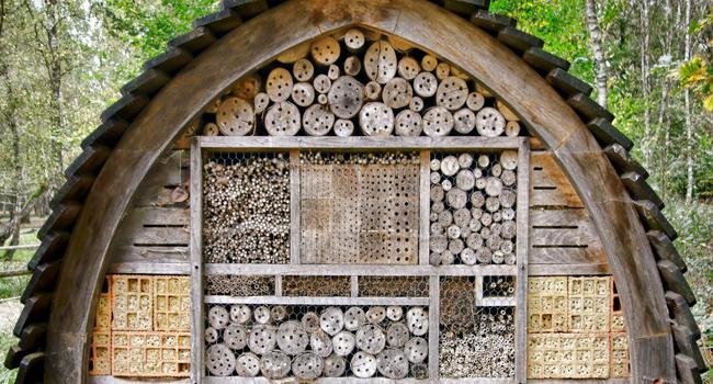 diy how to keep mason bees